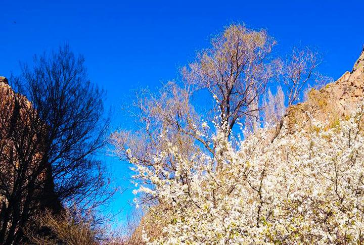 Erzurum'da Baharın İlk Olarak Yaşandığı İlçeler