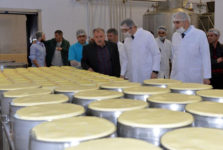 Erzurum İli Süt Sektörü Soğuk Zincir Süt Kurulumu